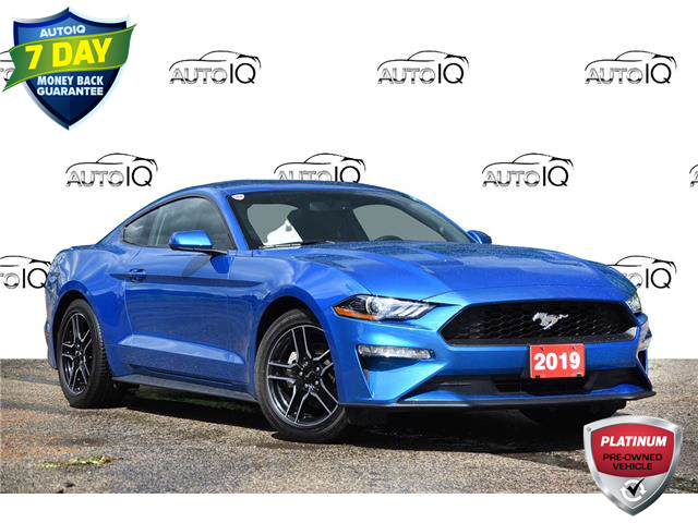 2019 Ford Mustang EcoBoost (Stk: 21E2330AX) in Kitchener - Image 1 of 18