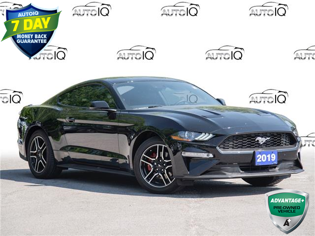2019 Ford Mustang EcoBoost Premium (Stk: 50-183) in St. Catharines - Image 1 of 28