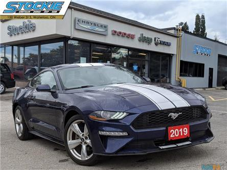 2019 Ford Mustang EcoBoost (Stk: 35667) in Waterloo - Image 1 of 26