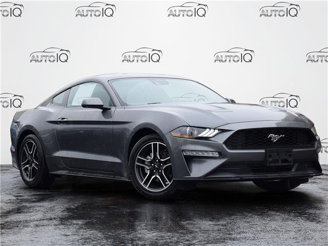 2021 Ford Mustang EcoBoost Grey