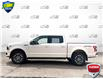 2019 Ford F-150 XLT (Stk: FD172A) in Sault Ste. Marie - Image 3 of 24