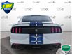 2016 Ford Shelby GT350 Base (Stk: W0946A) in Barrie - Image 5 of 22