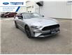 2021 Ford Mustang GT Premium (Stk: M5101400) in Wallaceburg - Image 1 of 19