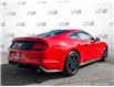 2019 Ford Mustang EcoBoost (Stk: 1260A) in St. Thomas - Image 4 of 26