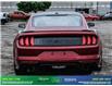 2019 Ford Mustang GT Premium (Stk: 14073) in Brampton - Image 6 of 30