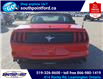 2021 Ford Mustang EcoBoost (Stk: S10741R) in Leamington - Image 6 of 27
