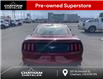 2016 Ford Mustang EcoBoost Premium (Stk: N05093AA) in Chatham - Image 4 of 19